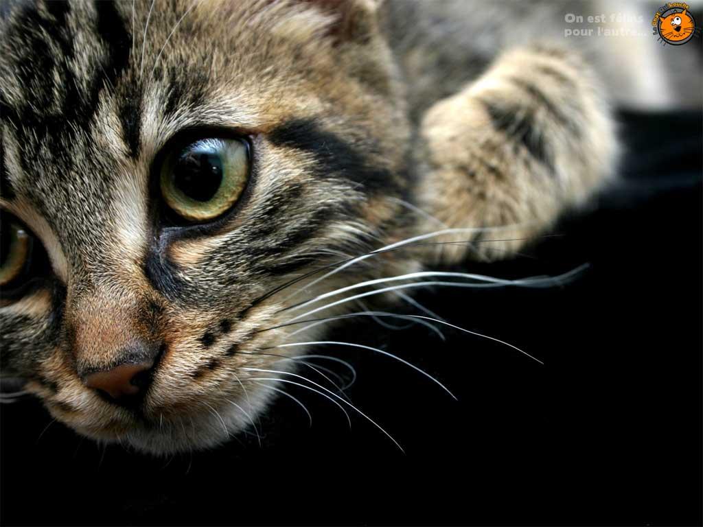 le chat qui louche fonds d 39 cran chats. Black Bedroom Furniture Sets. Home Design Ideas